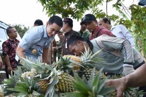 Zola Beli Nanas dan Tinjau Pusat Oleh-oleh di Desa Tangkit Baru