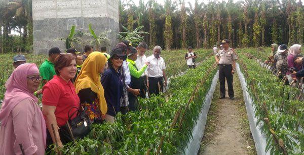 Head Plantation Operations Minamas Plantation, Roslin Azmy Hassan meninjau salah satu kebun dalam program Desan Mandiri Cegah Api