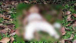 Heboh... Mayat Bayi Ditemukan di Semak, Diduga Dibunuh Ayah Kandung