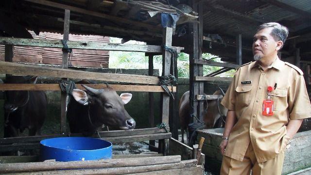 Pengecekan hewan kurban