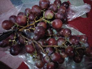 Heboh Soal Anggur Merah  Ternyata Hasilnya Negatif, Ketahanan Pangan: Tak Ada Formalin
