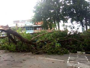 Angin Kencang dan Hujan Lebat Sebabkan Pohon Tumbang di Thehok, Lalu Lintas Macet