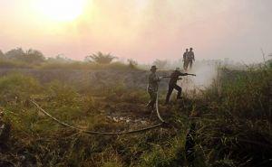 Beranda Perempuan Desak Tindak Tegas Perusahaan Pembakar Lahan Gambut