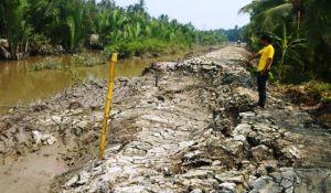 Pembangunan Tanggul di Parit V Tungkal Ilir Jebol, Diduga Ini Penyebabnya