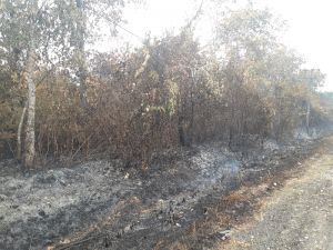 Karhutla Meluas, Sudah 47.510 Lahan dan Hutan yang Terbakar