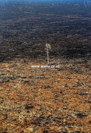 Asap Tebal Masih Selimuti Dua HPH di Jambi, WARSI: Ada Korelasi Kebakaran dengan Aktifitas Ilegal