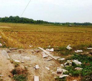 Kemarau, 500 Hektar Tanaman Padi di Tanjabtim Terancam Gagal Panen