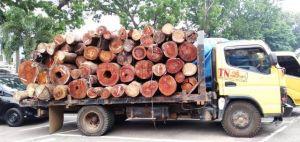 Jadi Tersangka Ilegal logging, Polda Jambi Tangkap Direktur PT Tegar Nusantara Indah