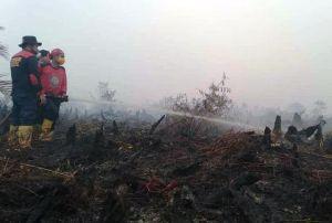2.900 Hektar Lahan dan Hutan Di Tanjabtim Terbakar di Tahun 2019