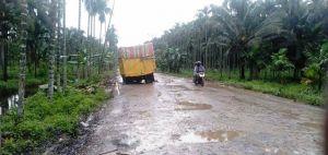 Jalan Milik Provinsi Yang di Tanjabtim Butuh Perhatian Khusus