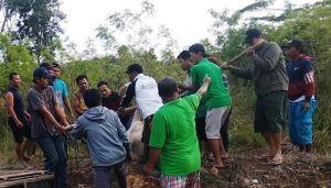 Setelah 24 Jam Berkeliaran, Akhirnya Sapi Kurban RT 73 Alam Barajo-Jambi Berhasil Ditemukan