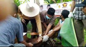 Tunjukan Kepedulian, SAH dan Keluarga Besar Gerindra Jambi Kurban 4 Ekor Sapi
