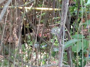 Heboh.. Penemuan Mayat Di Pinggir Jalan Simpang Kawat Kota Jambi