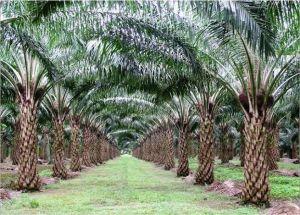 Kasus Pencabutan Izin Usaha Perkebunan di Sorong; Bukti Moratorium Sawit Wajib Diperpanjang