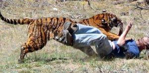Saat Cari Sinyal HP, Pemuda di Merangin Tewas Diterkam Harimau